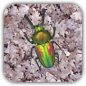Stag beetle Live Wallpaper Fre
