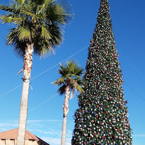 Only in Arizona. The largest Christmas Tree in the USA and Palm trees!!!And no SNOW. by Chuck Cross - Public Holidays Christmas