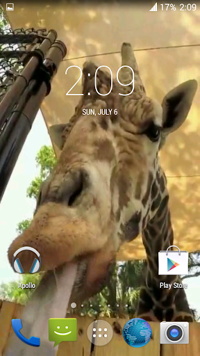 Giraffe HD. Live Wallpaper