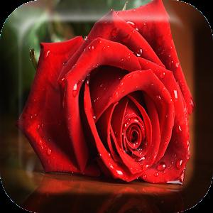 गुलाब लाइव वॉलपेपर APK
