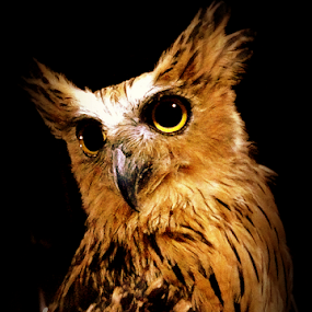 owl by Dino Rimantho - Instagram & Mobile iPhone (  )
