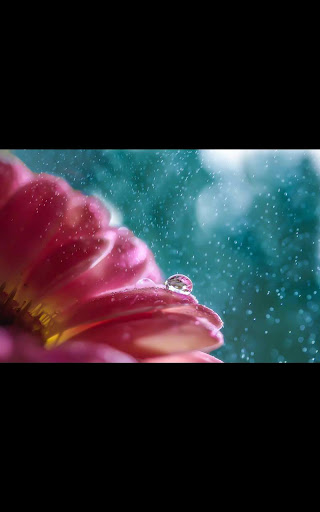 Color Rain Flowers LWP
