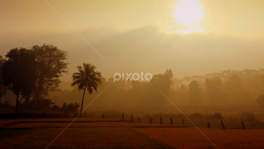 Mystified Morning by Nitin Chauhan - Landscapes Prairies, Meadows & Fields ( field, landscape, early morning,  )