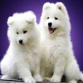 3D cute dog A8