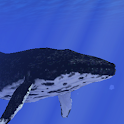 Ocean Whale Live wallpaper Pro icon
