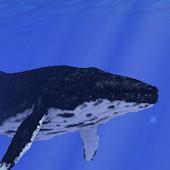 Ocean Whale Live wallpaper Pro