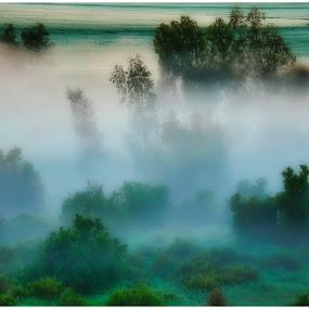 Misty Morning by Glenn Visser - Landscapes Weather ( farmlands, morning, misty, mist )