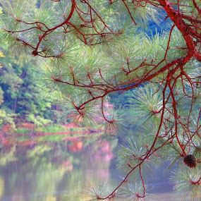 Pine Needle Lake by Tanya Washburn - Landscapes Forests ( pinecone, nature, pine tree, green, lake,  )