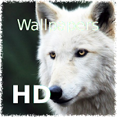 Best wallpapers: Wolves