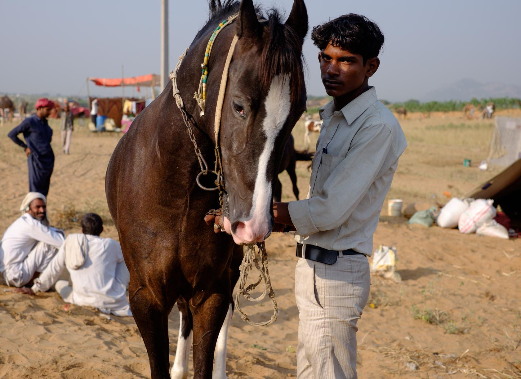 Horse Trader, Pushkar, India