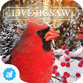 Live Jigsaws - Winterland Free