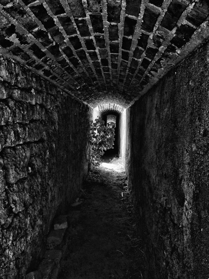 The End by Borko Grubisic - Black & White Buildings & Architecture ( plant, old, bw, antique, light, tunnel )