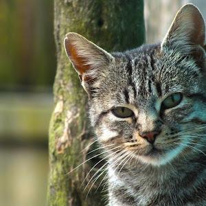 pisica bela rapa iepei2.jpg