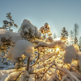 Nature in Norway by Rose-marie Karlsen - Landscapes Sunsets & Sunrises ( winter, cold, snow, sunshine, norway )