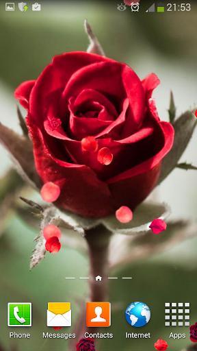玫瑰動畫壁紙
