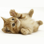 Funny Animals Photo icon