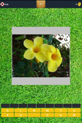 Tebak Gambar Bunga