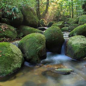 Ulu Yam, Selangor, Malaysia by Bernice Then - Landscapes Waterscapes ( stream, jungle, stream & creek, ulu yam,  )