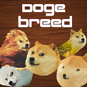 Doge Breed