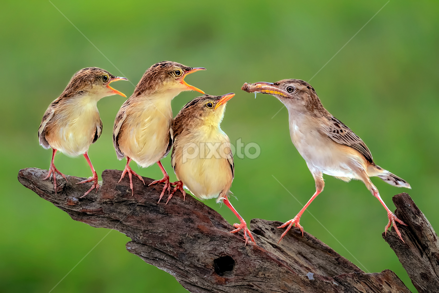 Yummy Lunch by Husada Loy - Animals Birds