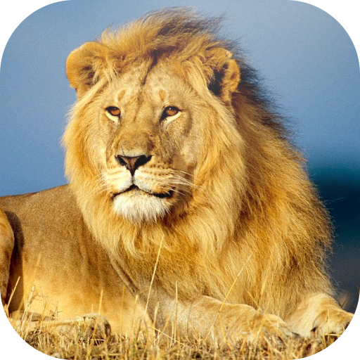 動物の壁紙HD 個人化 LOGO-玩APPs
