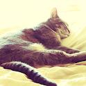 Sleeping Cat Live Wallpaper icon