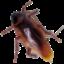 Roaches logo