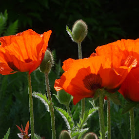 by Brigi Li - Flowers Flower Gardens