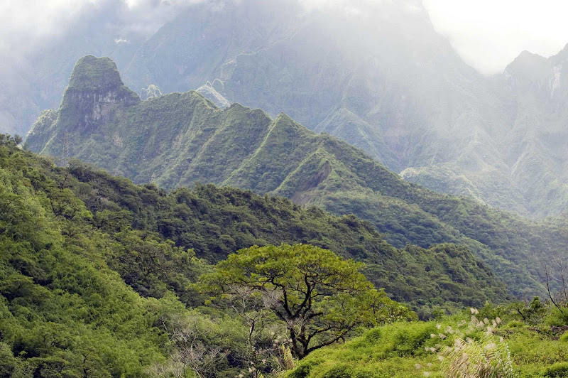The lush mountains of Mo'orea.