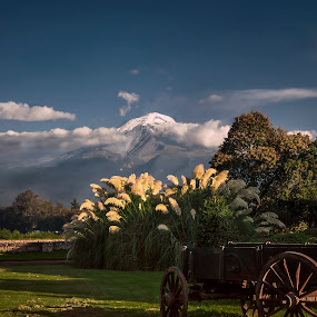 Popocatepetl by Christian Diboky - Landscapes Mountains & Hills ( blue sky, volcano, grass, blue, green, mexico, popocatepetl, , snow, winter, cold )