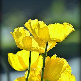 Sun Bathing by Azmi Han - Flowers Flower Gardens