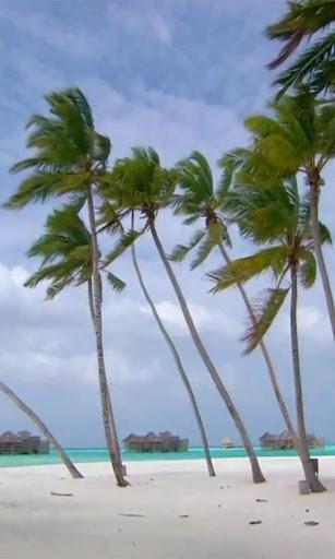 Palms On Beach Live wallpaper