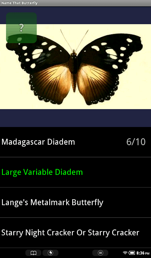 Name That Butterfly - screenshot