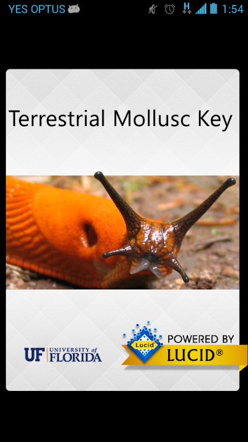Terrestrial Mollusc Key- screenshot