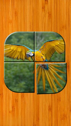 鸟益智游戏下载免费