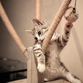 Jasper by I Snapit - Animals - Cats Kittens (  )