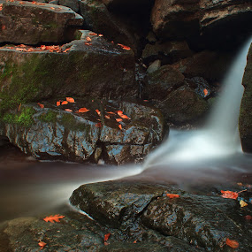 by Jamie Rabold - Landscapes Waterscapes ( water, mn, stream, soft water, waterfall, leaves, duluth, minnesota, cascade, creek, north shore, wet, rocks, river,  )