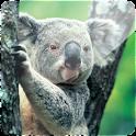 3D Koala logo
