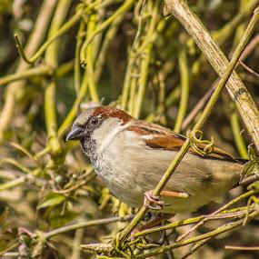 Our resident bird by Steve Trigger - Animals Birds