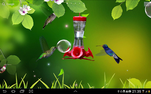 Hummingbirds wallpaper