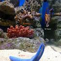 Blue Starfish, another Starfish & Seahorse