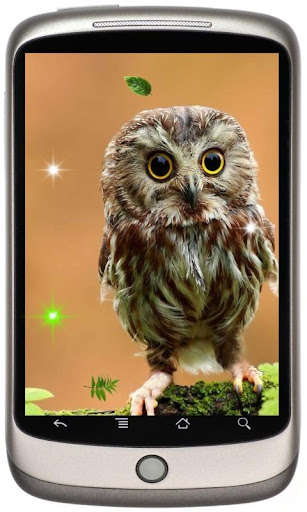 Funny Owl live wallpaper