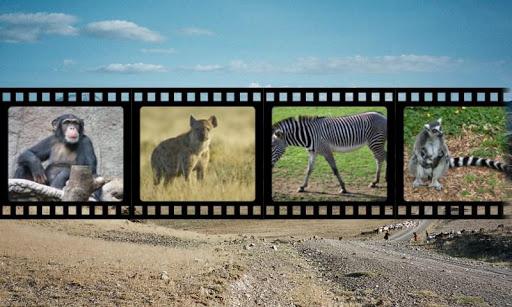 非洲動物聲音