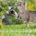 Cute Cat icon