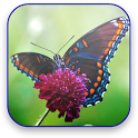 Butterfly Live Video Wallpaper icon