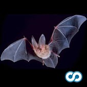 Name That Bat