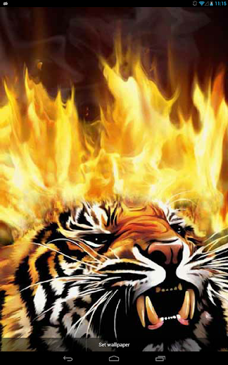 Furious Tiger Live WP
