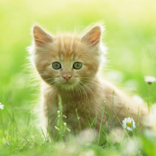 瓷磚拼圖:可愛的小貓