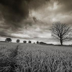 Summer? by Ben Leng - Landscapes Prairies, Meadows & Fields (  )