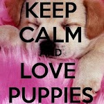 Keep Calm 4 PUPPIES Online Apk